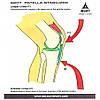 Наколенник при болезни Шляттера SELECT Knee support for Jumpers knee 6207 p.XXL, фото 6