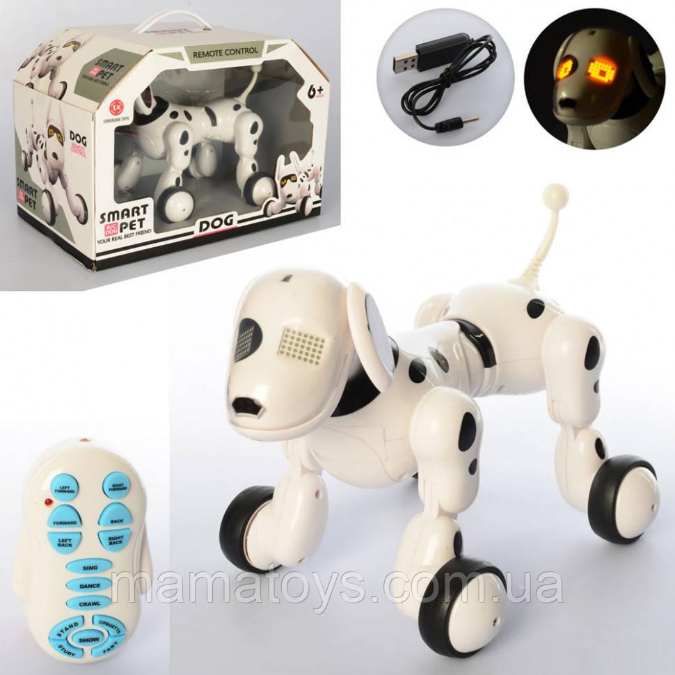 Собака на Радиоуправлении 6013-3 Smart Pet Размер 23 см Ходит, танцует, звук, свет, Аккумулятор, USВ зарядное