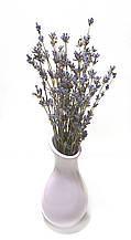Букет лаванди /сухоцвіт натуральної лаванди/