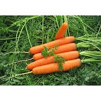 Семена моркови гибридной БОЛИВАР F1 (тип НАНТЕС), (фр. 1,4-1,6) 500 000сем., Clause, Франция