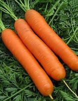 Морковь гибридная тип НАНТЕС (поздняя для хранения и переработки) МАТЧ F1 (25 000сем.), Clause, Франция
