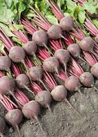 Семена свеклы Беттолло F1, 10 000 семян