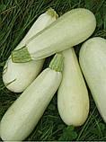 Белоплодный насіння кабачка 500 грам(5000-6000 шт) Україна, фото 3