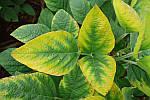 🍀Как визначити нехватку поживних речовин в рослинах за зовнішнім виглядом?