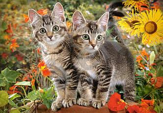 Пазлы на 1500 элементов Приятели котёнка (котята, животные), (Castorland, Польша)
