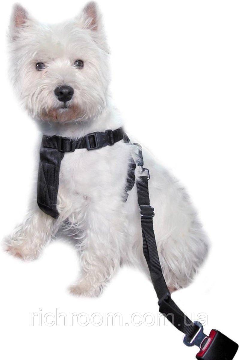 Повідець - шлея для собак у авто/для прогулянки Jollypaw