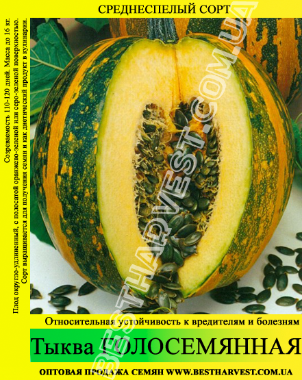 Семена тыквы «Голосемянная» 10 кг (мешок)