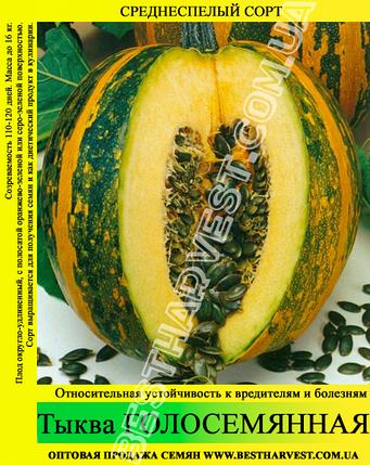 Семена тыквы «Голосемянная» 10 кг (мешок), фото 2