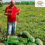 Семена, арбуз ЮММИ F1 / JUMMI F1, LARK SEEDS (США), 1000 семян, фото 2