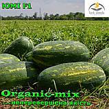 Семена, арбуз ЮММИ F1 / JUMMI F1, LARK SEEDS (США), 1000 семян, фото 3