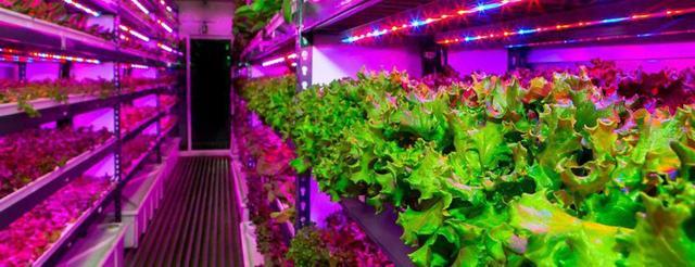 светодиодное фито освещение для растений