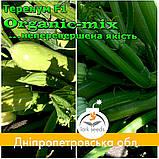 Семена кабачка Теренум F1 / Terenum F1, тип Искандер, ТМ Spark Seeds (США), проф. пакет 2500 семян, фото 2