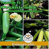 Семена кабачка Теренум F1 / Terenum F1, тип Искандер, ТМ Spark Seeds (США), проф. пакет 2500 семян, фото 4