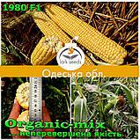 Семена, сахарной кукурузы 1980 F1 (США), фермерская упаковка (2 500 семян), ТМ Spark Seeds, фото 4