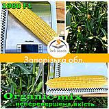 Семена, сахарной кукурузы 1980 F1 (США), фермерская упаковка (25 000 семян), ТМ Spark Seeds, фото 2