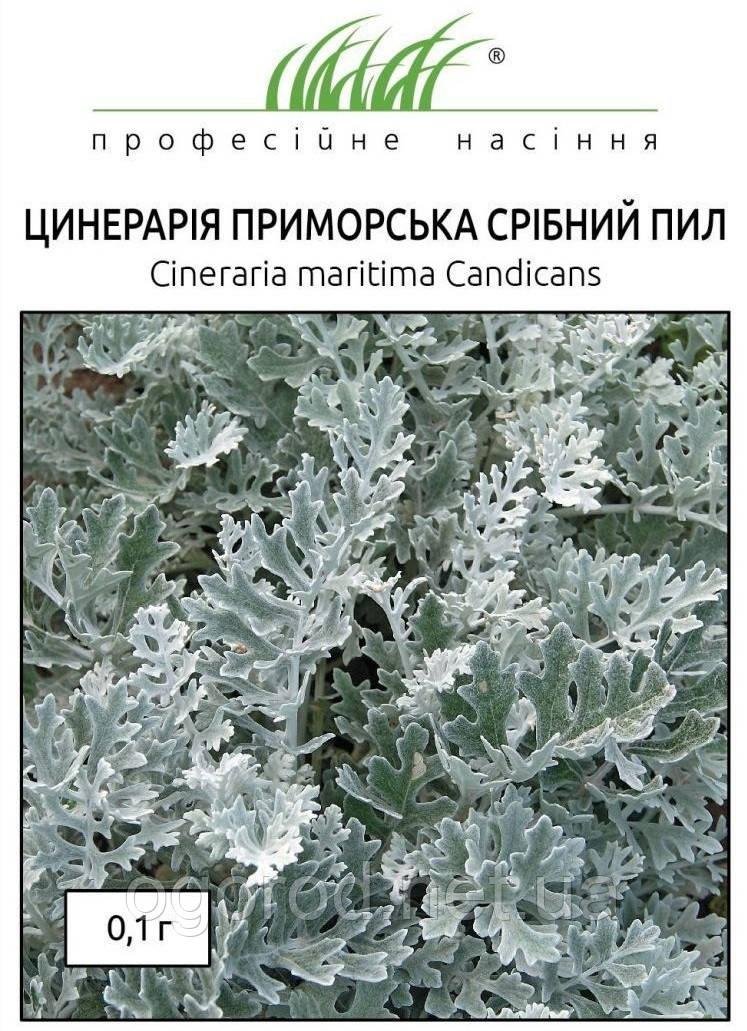 Семена цинерарии приморской Серебрянная Пыль 0,1 г(~200 шт) Hem Zaden Голландия