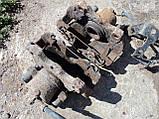 Б/У передние суппорта опель зафира а, фото 2