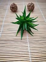 Суккуленты искусственные, зеленый, 7 см, фото 1