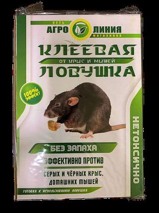 Агролиния клеевая ловушка-книжка от грызунов, средняя — безопасное средство, фото 2