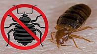 Средство от клопов Bedbug Repellent (порошок) / Засіб від клопів Bedbug Repellent (порошок)