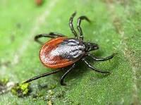 Средство от клеща лесного Tick Repellent 1 л / Засіб від кліща лісового Tick Repellent 1 л