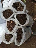 Почва для голубики Киев Грунт для посадки голубики продажа Киев. Торф кислый., фото 9