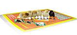 Електрокилимок з підігрівом для курчат ТРІО 01501, 43 х 30 см, фото 3
