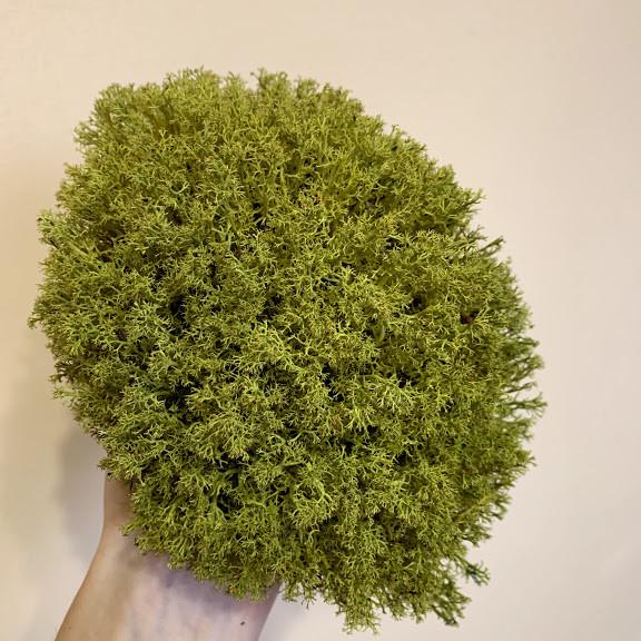 Стабілізований мох Green Ecco Лишайник Ягель український оливковий 4 кг