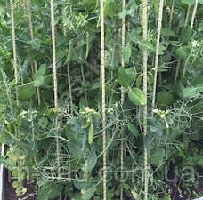 Опора для подвязки растений из композита,Ø12 мм, высота 200 см, фото 2