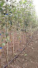Опора для подвязки растений из композита, Ø 12 мм, высота 180 см, фото 2