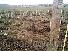 Опора для подвязки растений из композита,Ø12 мм, высота 120 см, фото 3