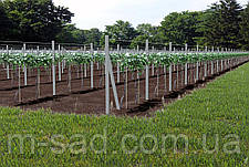 Опора для подвязки растений из композита, Ø 10 мм, высота 200 см, фото 3
