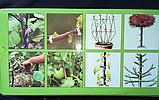 Тапенер для подвязки растений, подвязочный степлер для растений Tapetool, фото 6