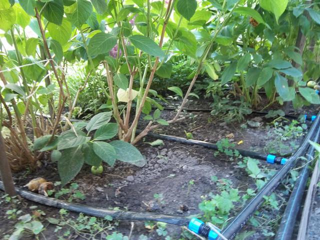 Полив овощей, повышаем урожайность