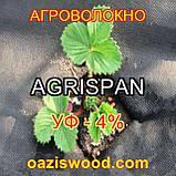 Агроволокно чорне UV-P 4% AGRISPAN-АГРИСПАН Польська якість за доступною ціною. 1.6х50м щільність 50г/кв.м., фото 4