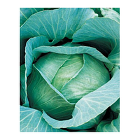 Семена капусты б/к Амагер 611  0,5 кг. Коуел (Сатимекс)