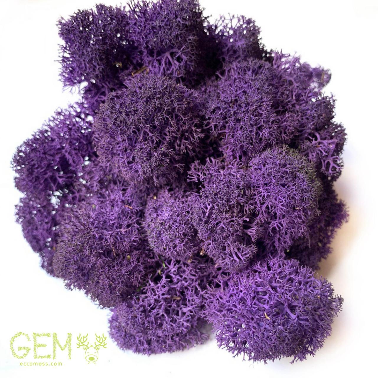 Стабилизированный мох Green Ecco Moss ягель скандинавский фиолетовый 4 кг