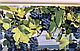 Панель ПВХ Регул Панно (Мерло), фото 6