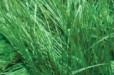 Пряжа для вязания Декофур (травка) зелёная трава 595