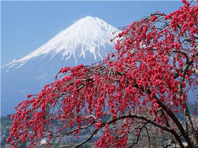 """Картина по номерам Y5463_O 40*50см """"Фудзияма"""" OPP (холст на раме краск. кисти. ), фото 2"""
