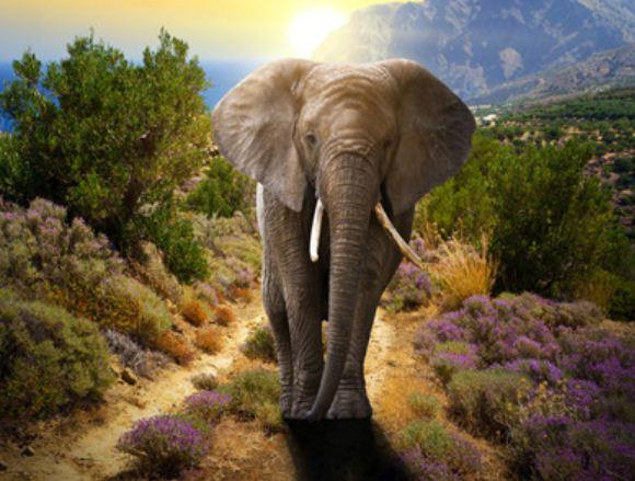 """Картина по номерам RA3205_O 40*50см """"Слон"""" OPP (холст на раме с краск.кисти)"""