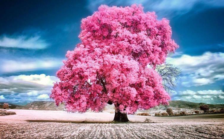 """Картина по номерам EOTG6029_O 40*50см """"Цветущее дерево"""" OPP (холст на раме с краск.кисти), фото 2"""