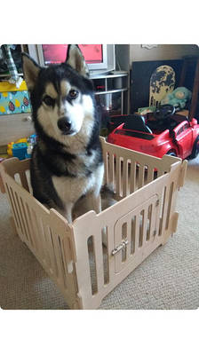 Товары для любителей домашних животных