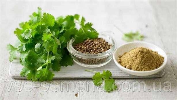 Кориандр, кинза 3 г (перефасовано Vse-semena)