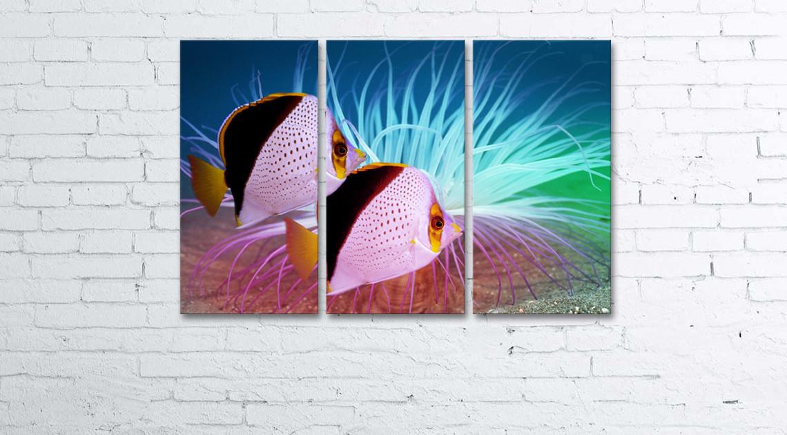 Модульная картина на холсте 3 в 1 Тропические рыбы 60х90 см