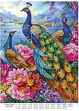 Райські павичі