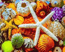 Картина за номерами. Черепашки і зірки, море, 40*50 см, Brushme