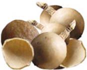 Масло Крамбе/Crambe Abyssinica 25 грамм