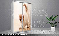 Шкаф - купе Кошечка, фото 1