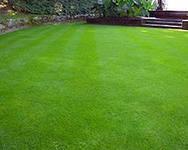 Универсальный газон от 5 кг. Урожай 2020 г.
